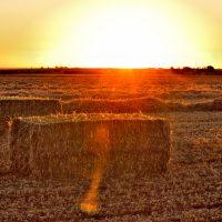 Sunset over the hay paddocks