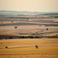 The Barossa Valley