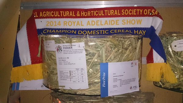 Awards Champion Domestic Cereal Hay